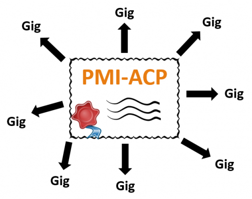 Get Gig-Ready with the PMI-ACP